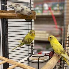 King Feed Birds