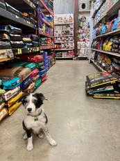 Dry Dog Food Aisle