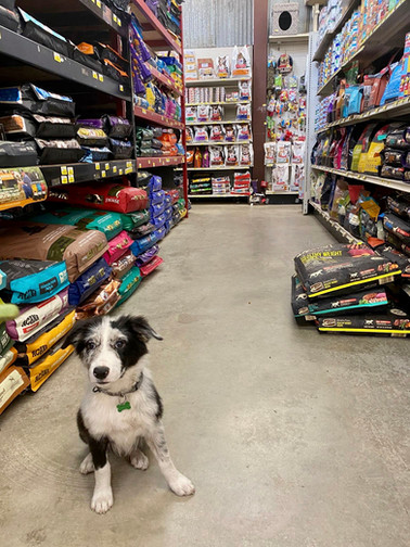 Dry Dog Food Aisle