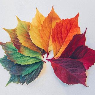 Seasonal & Annuals