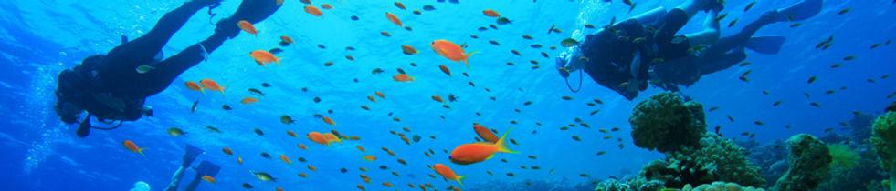 Taucher im Riff mit Fischschwarm