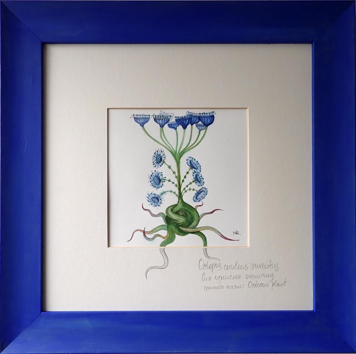 Octopusa Plant