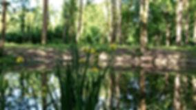 la mare aux iris.jpg