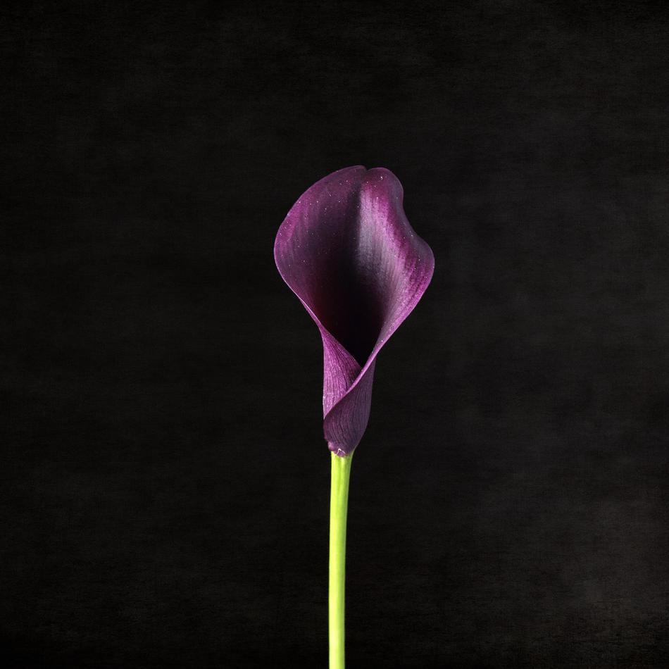 """""""Purple feeling"""""""
