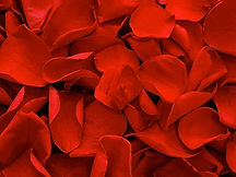 Preserved-Rose-Petals-Red-0.jpg