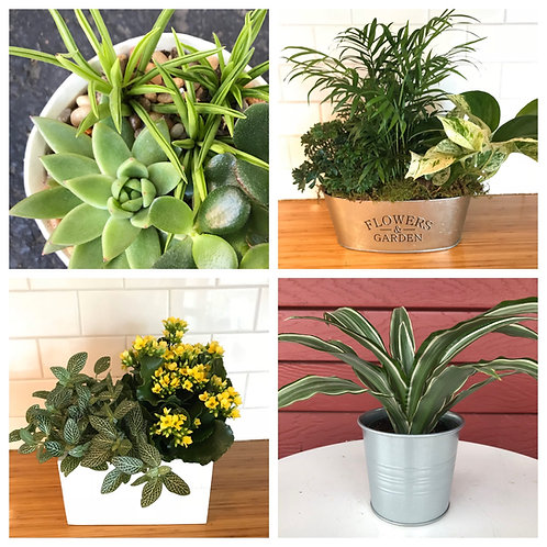 Plant Subscription - weekly or monthly