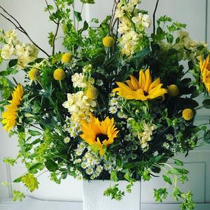 sunflower yellows