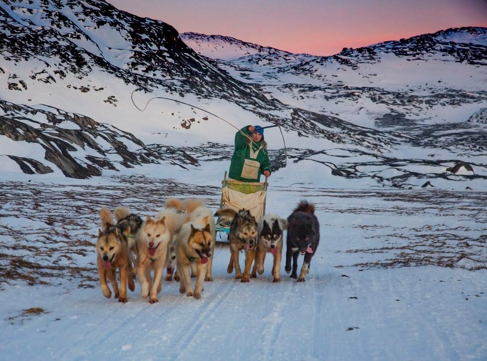 Greenland Dogsledding