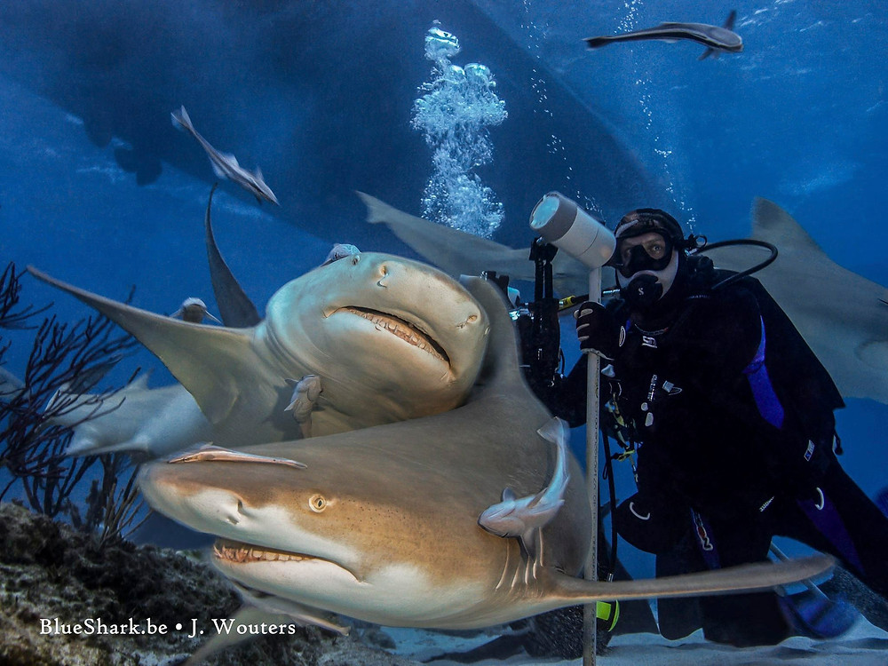 Matt McGee photographs sharks at Tiger Beach