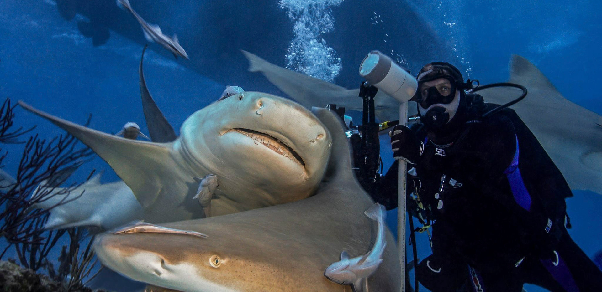 Diving with sharks at Tiger Beach in the Bahamas