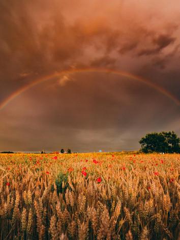 Poppyfield Rainbow