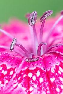 stulen rosa blomma auto blandad croppad