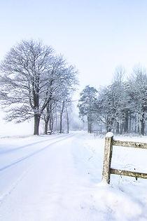 snödisdunge.jpg