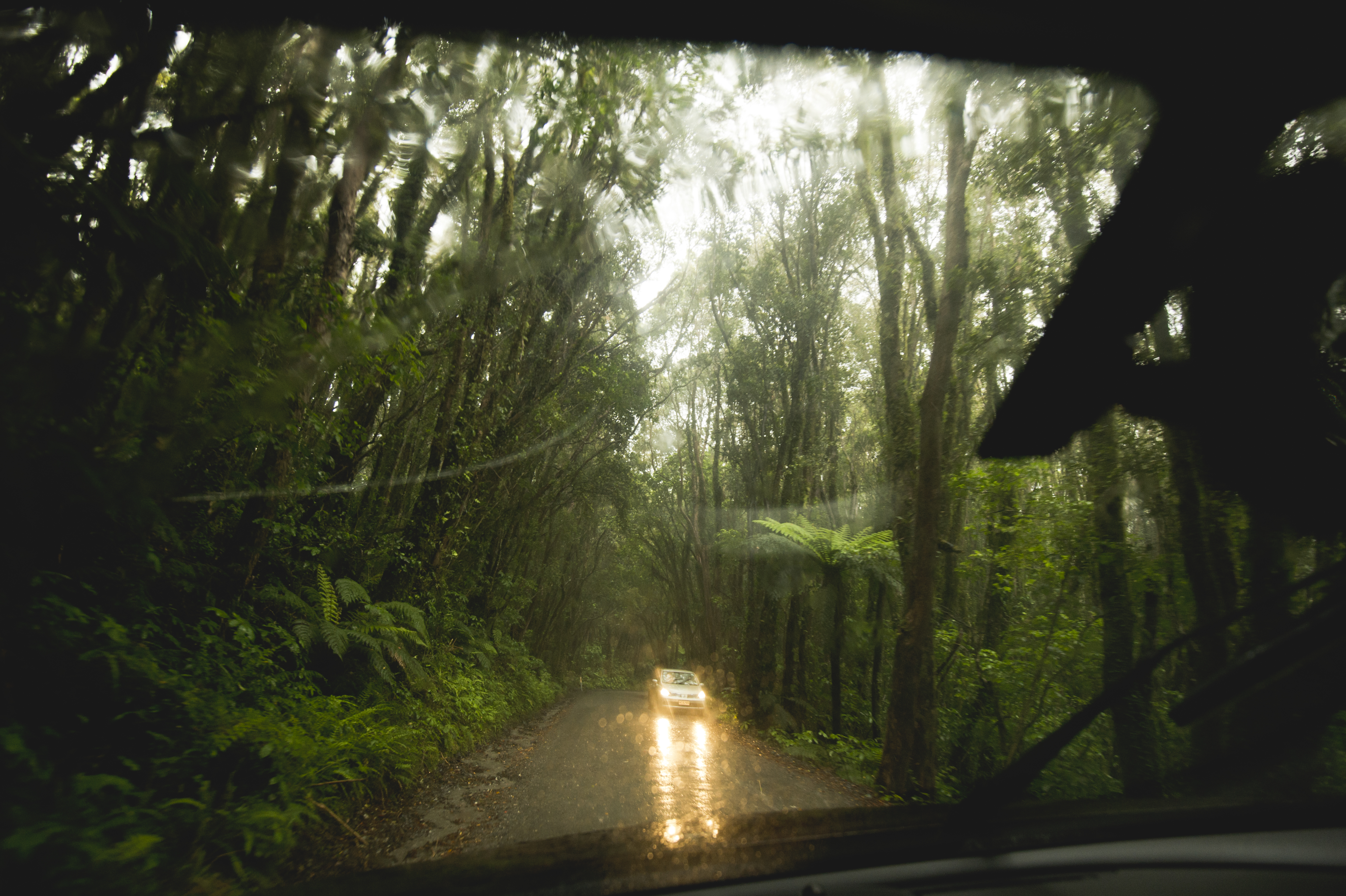 Rainy New Zealand Forest