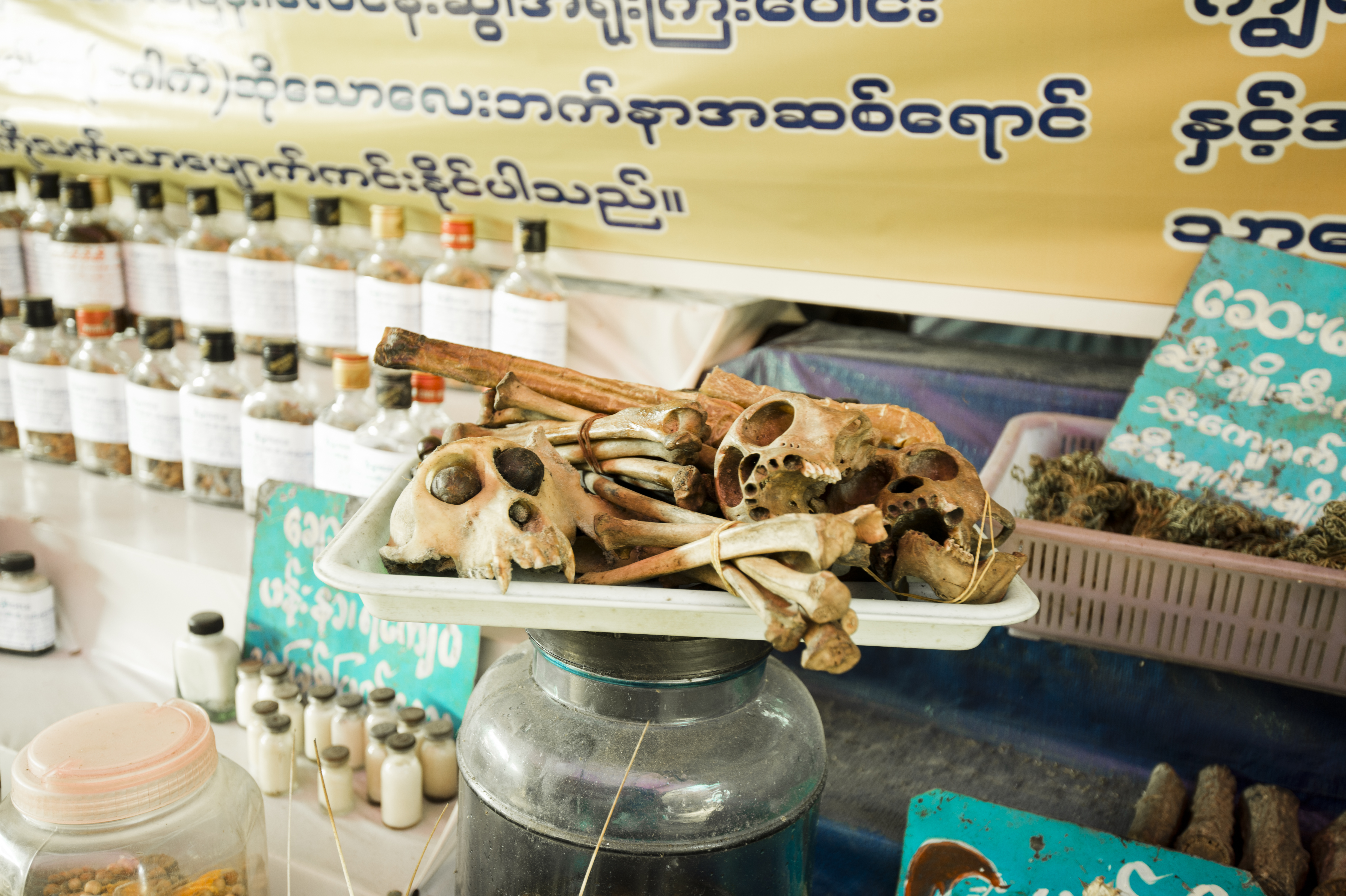 Burmese medicine