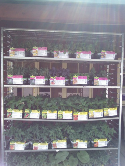 Herbs and Bedding plants