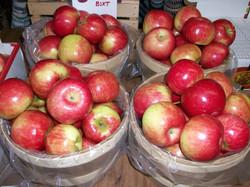 Lots of Apples….
