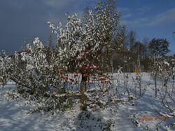 Winter at the Farm