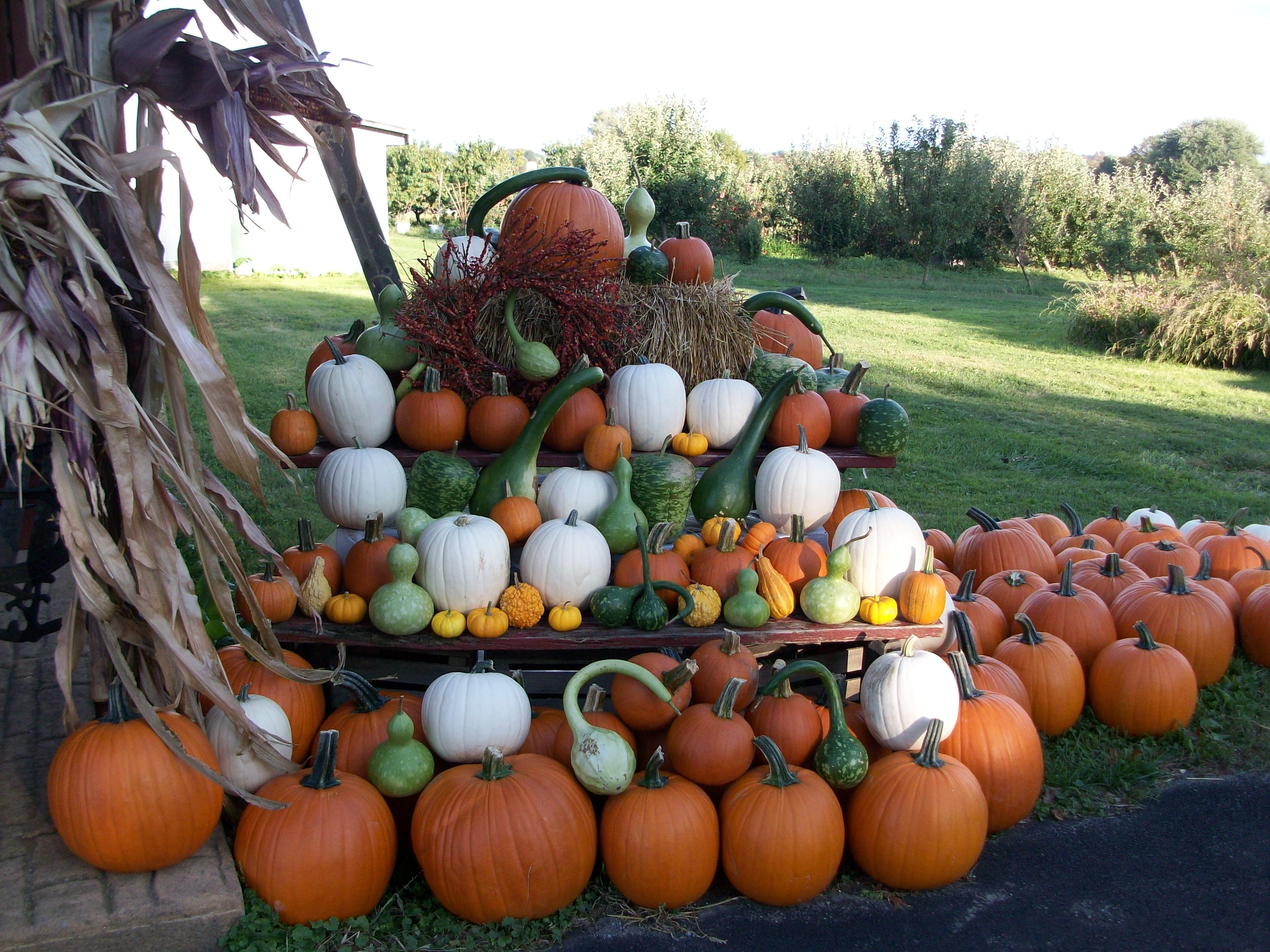 Gourds and Pumpkins
