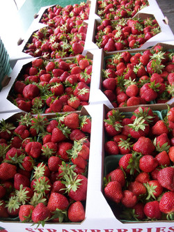 Ready picked Strawberries