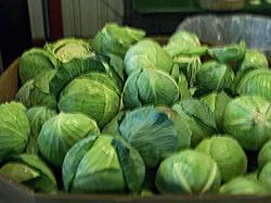 Time to Make the Sauerkraut