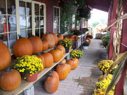 Time for Pumpkins and Mums