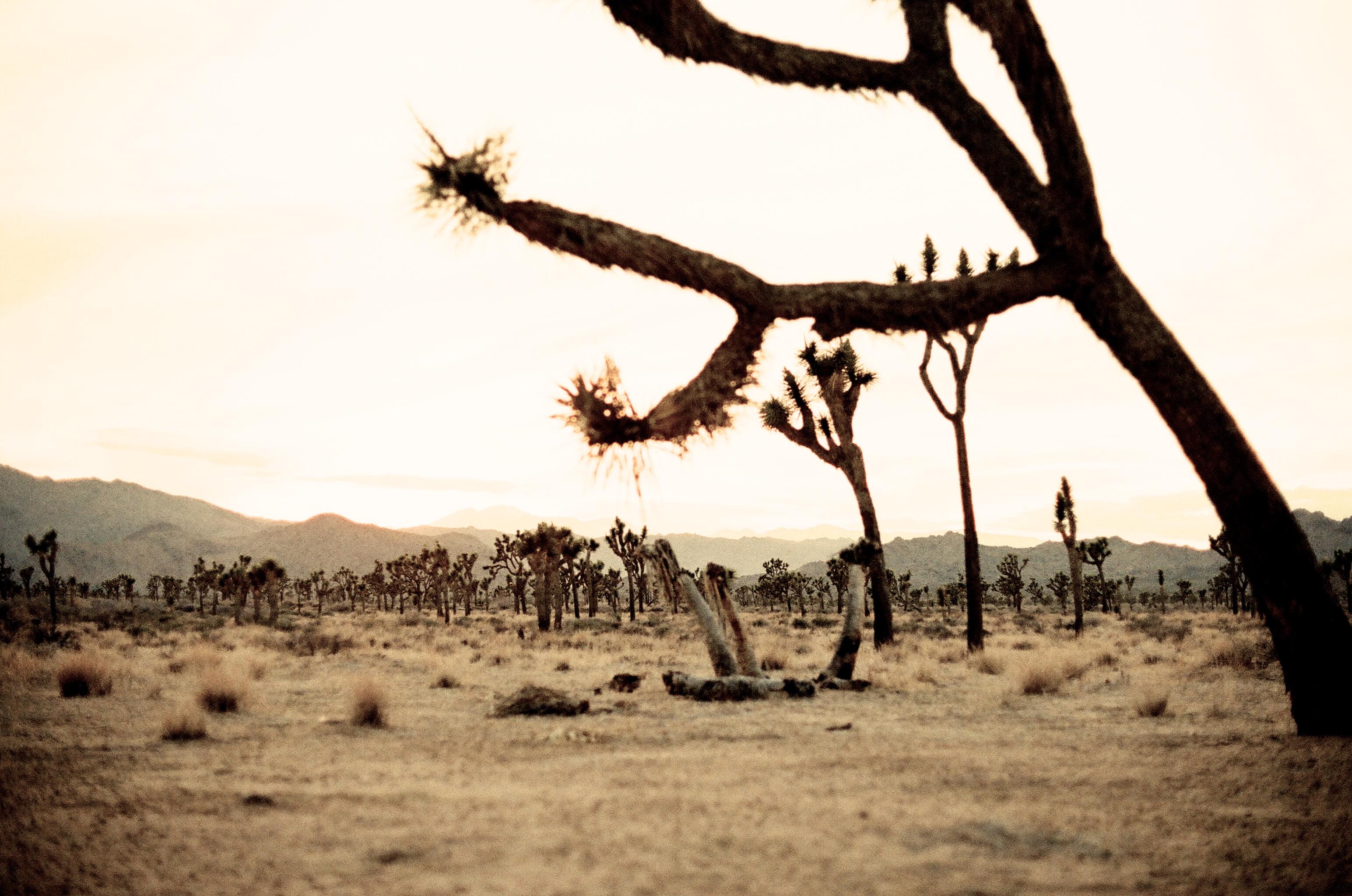 35mm film capture