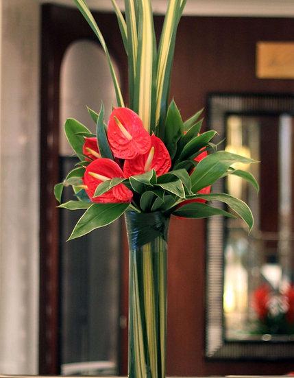 Anthurium - tall display