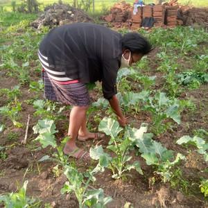 Erste Ernte des eigenen Gemüseanbaus
