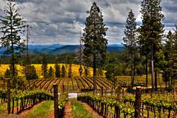 Spanish Flat Vineyards Georgetown