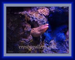 David Crosby - 16x20 Menacing Eel MA