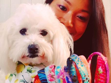 EHD Dog show sponsor: Snowy & Me - Best puppy