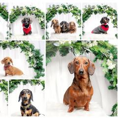 Top Dog Photography.jpg