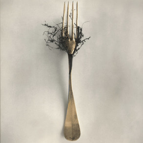 Fork and Roots