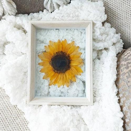 Flowers Afloat, Sunny Days, Pressed Sunflower Frame