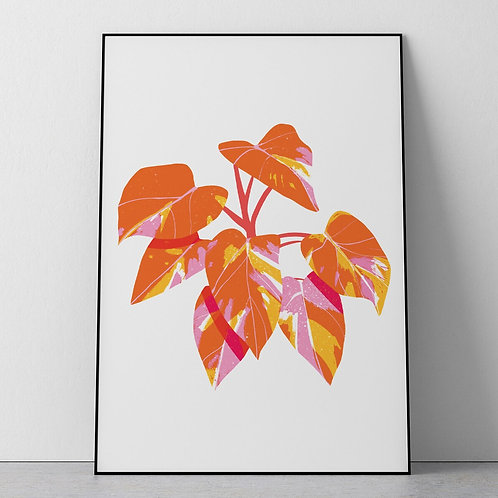 Nebo Peklo Acid Bright Pink Princess Philodendron Plant Giclee Print, A3, A4