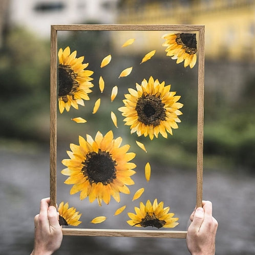 Flowers Afloat, Here Comes The Sun, Pressed Sunflower Frame