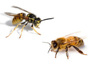 Bees and Wasps
