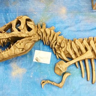 ティラノサウルス 化石