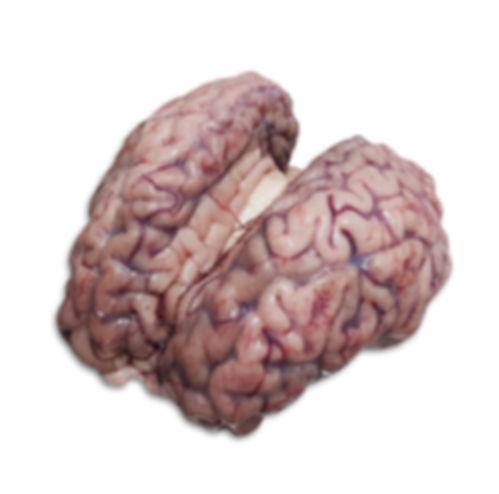 Brain With Membrane