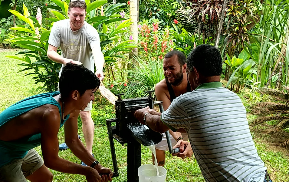 Pressing Sugarcane