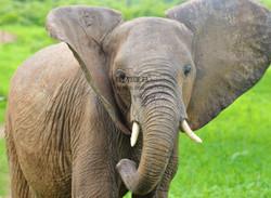 Elephant shot