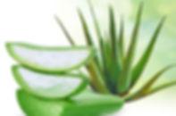 Aloe-vera-640x424[1].jpg