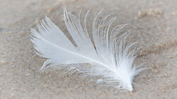 feather-3697356_1920.jpg