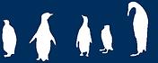 Falkland Island penguins logo