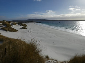 Photo by Peter Young (Falkland Islands)