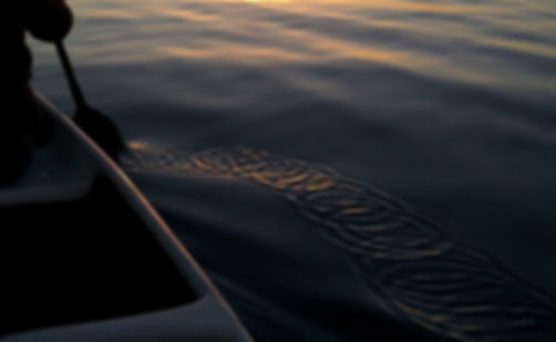 Canoe paddle at sunset creating concentric circles
