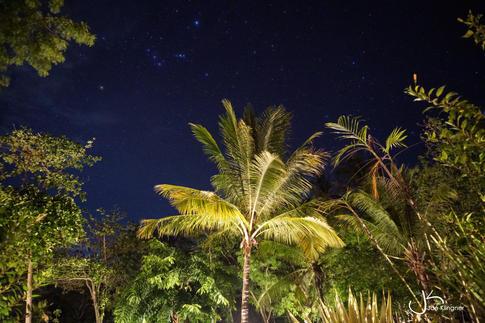 Stars and Palmtrees