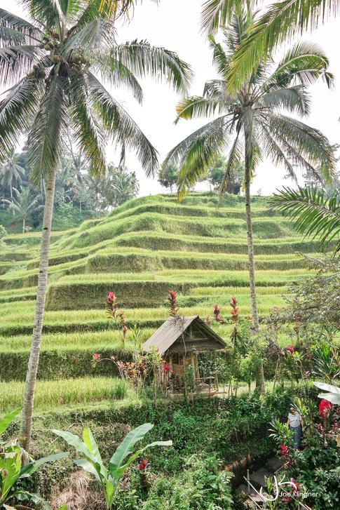 Rice Terrace Magic