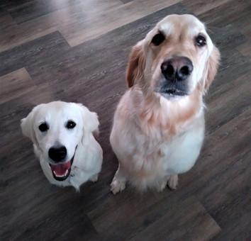 Daisy & Hazel